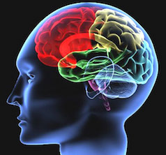 Color Brain 1.2.jpg