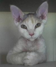 all ears2.jpg