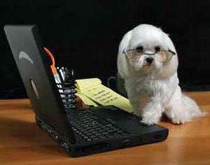 computerdog3.1.jpg