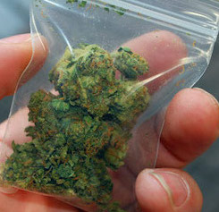 man-holding-bag-of-marijuana 1.213.jpg