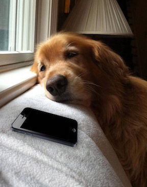Me-when-waiting-for-a-reply-from-my-crush