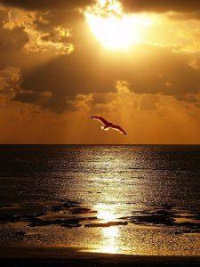 74eff9deca731fe5cfcc9d86a6e6d826-beach-sunsets-beach-sunset-pictures-225x300